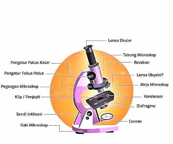 microskop+dan+fungsinya